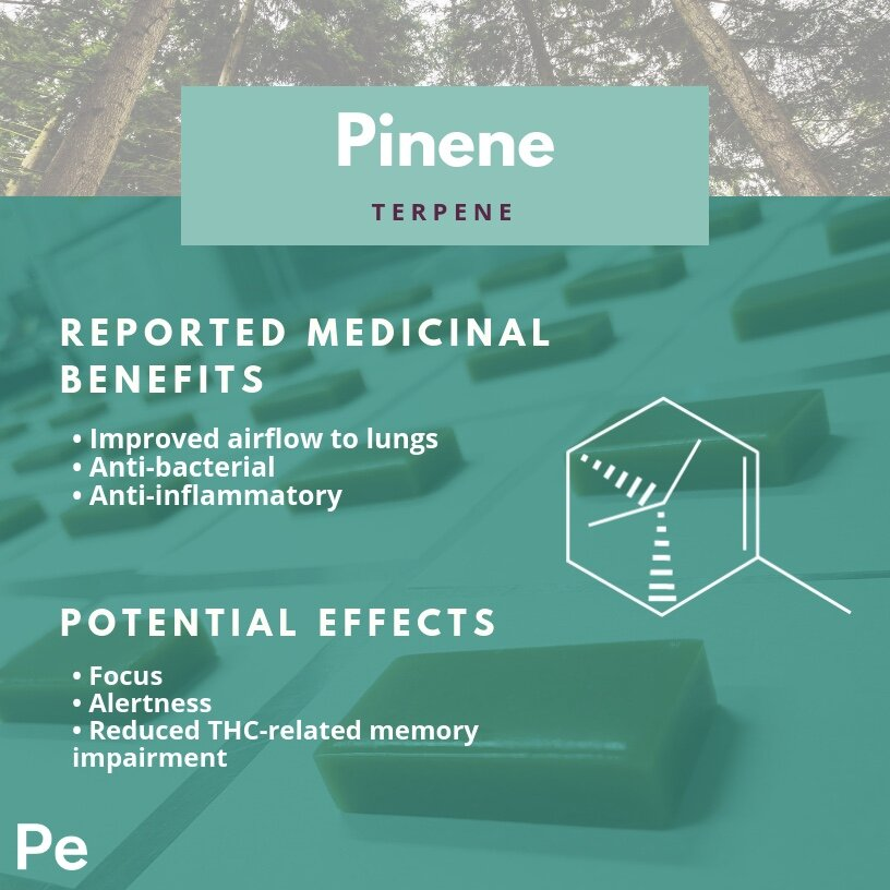 Pinene Profile.jpg