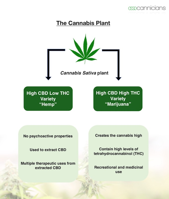 difference between hemp and cbd.jpg