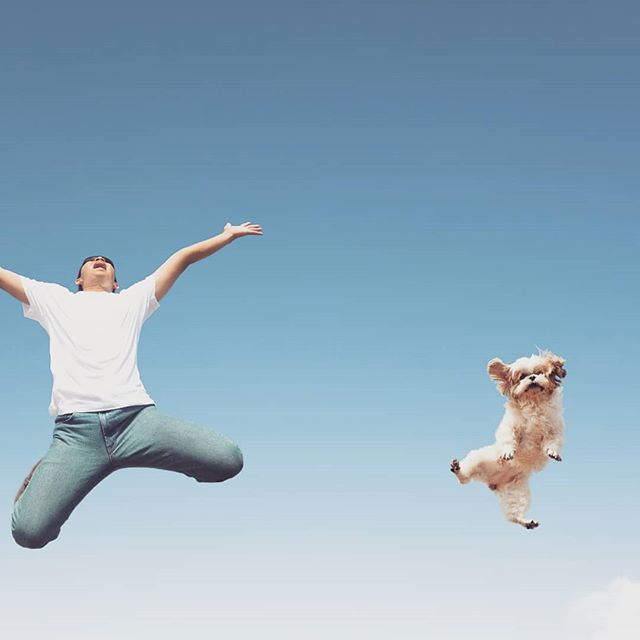 We got that friday feelin.....! What are you guys getting up to today? 🐾 www.pettd.com.au . . . . . #friday #fridayfun #doggo #puppers #fridaynightlights #friyay #petlovers #dog #weekend
