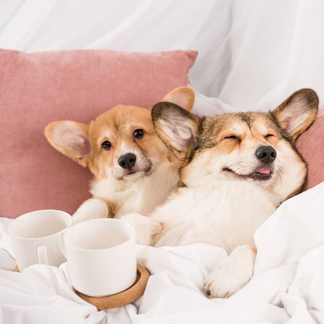 Saturday mood.......long weekend ready! 🐶 #pettdpups * * * * #dogsofinstagram #petzzrule #petoftheday  #dogsoverpeople #mydogismy #thepuppytown #dogsarelove  #mood #barked #whatthefluff #fortheloveofpets #pawz #instagood #animalfriends #womansbestfriend #sat #saturday