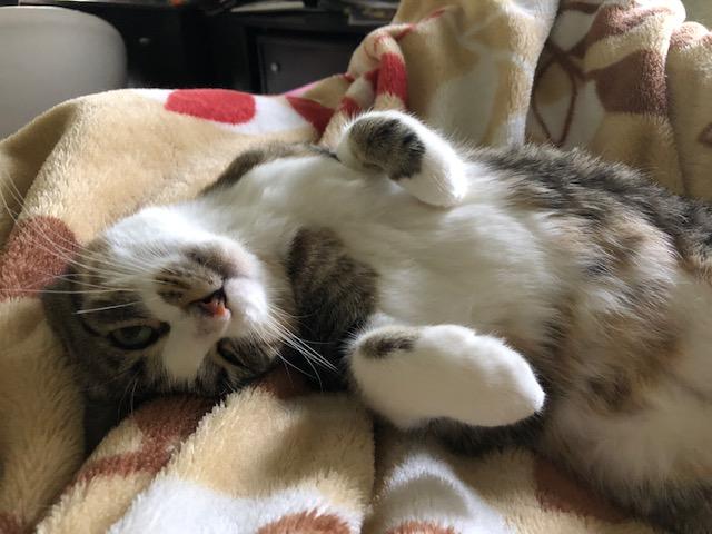 Momma Cat Madelyn4.jpg