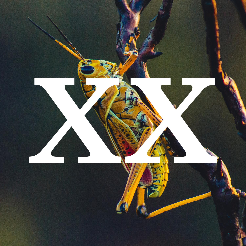 chillin cricket