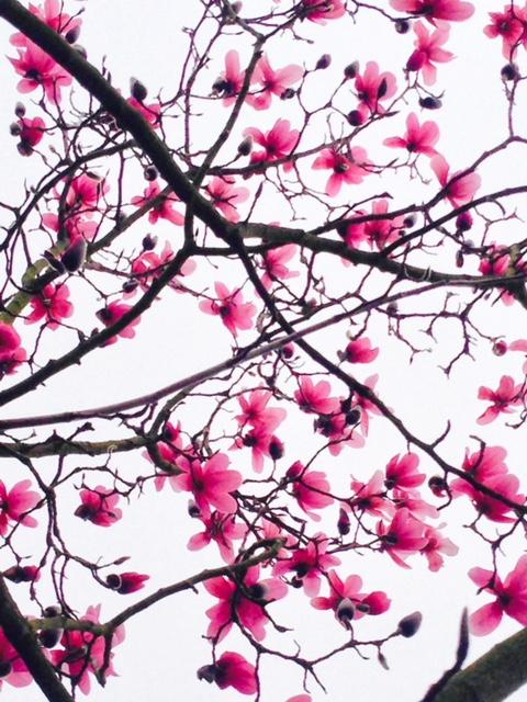 support-local-magazine-gardening-tips-for-every-season-flower-tree-inspiration.jpg