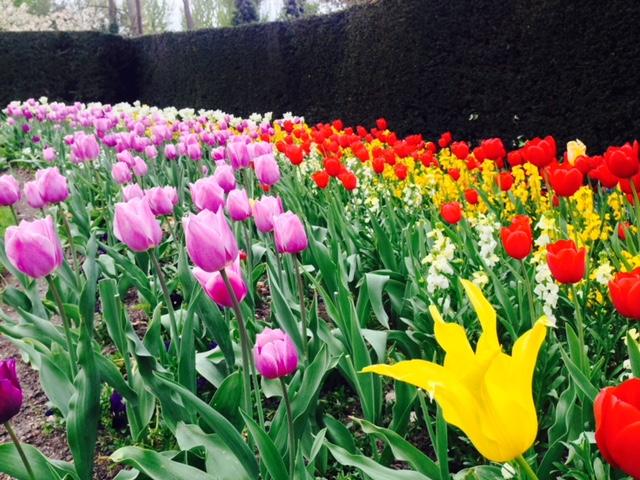 support-local-magazine-gardening-tips-for-every-season-flower-tree-inspiration.jpg-0.jpg