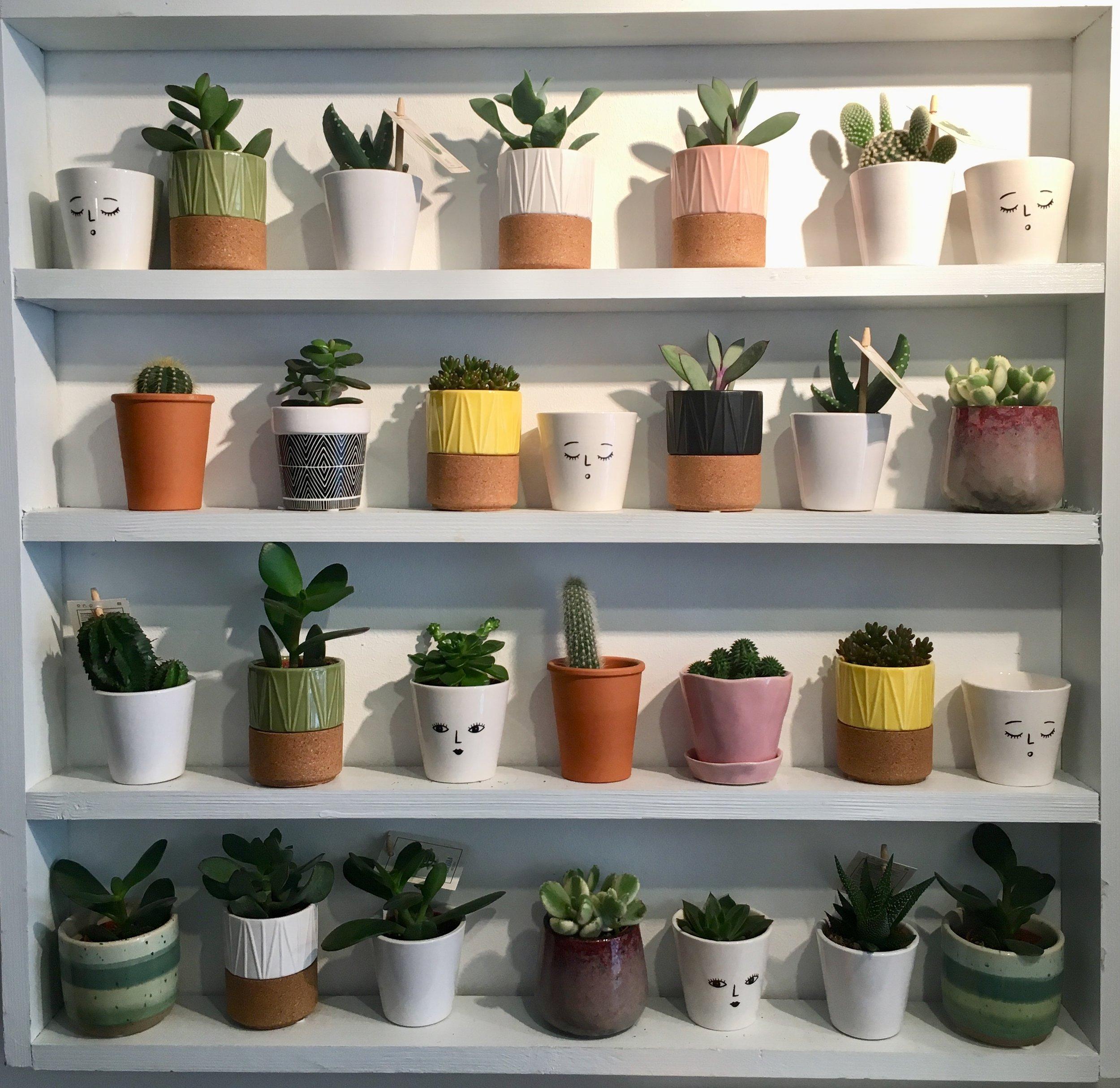 pot-and-vessel-folkestone-plant-shop-support-local-magazine-kent-pots.jpg