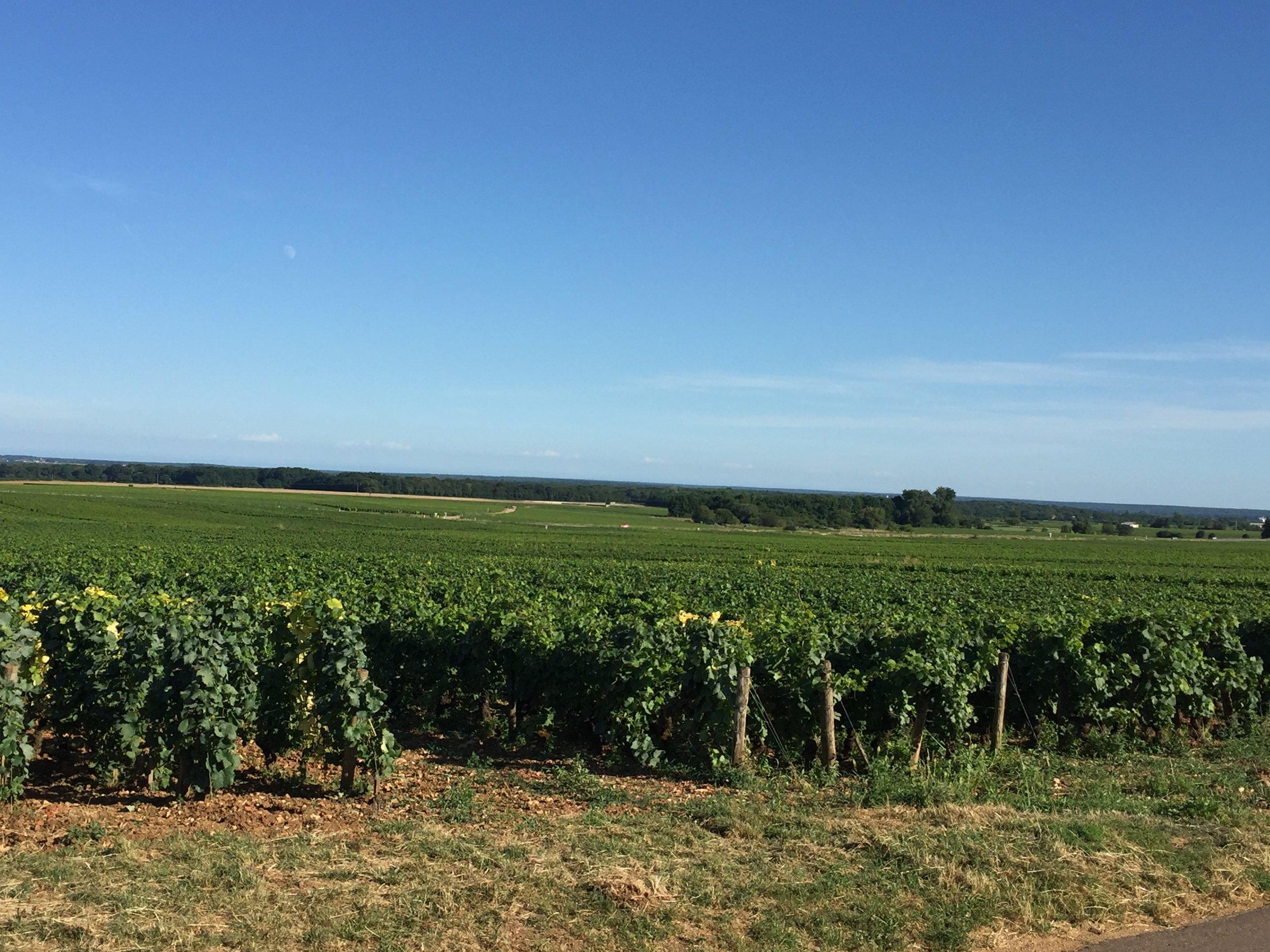 Burgundy-France-learning-french-support-local-magazine-landscape.JPG