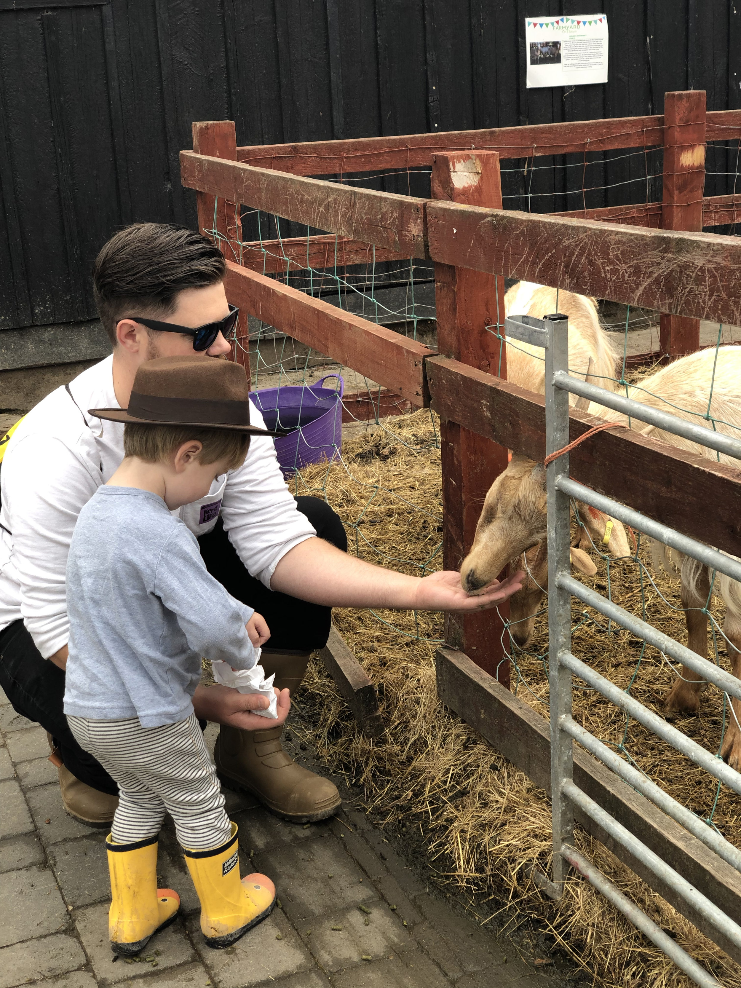 kent-life-farm-maidstone-family-day-out-support-local-magazine-feeding-animals.jpg