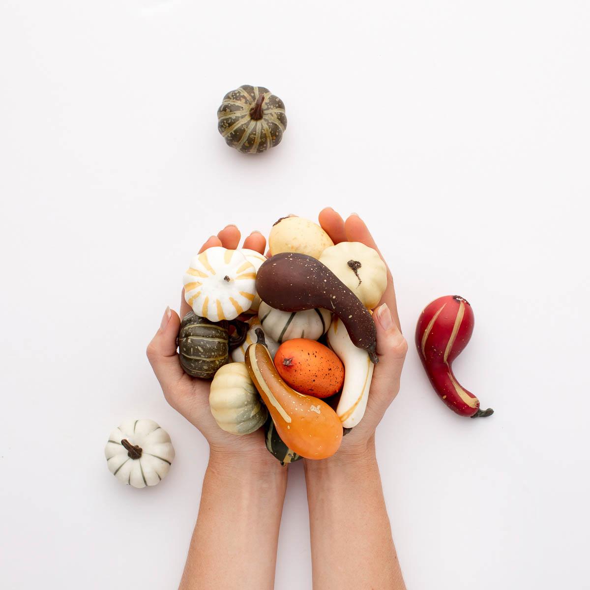pyo-pumpkin-kent-pick-your-own-pumpkin-variety-support-local-magazine.JPG