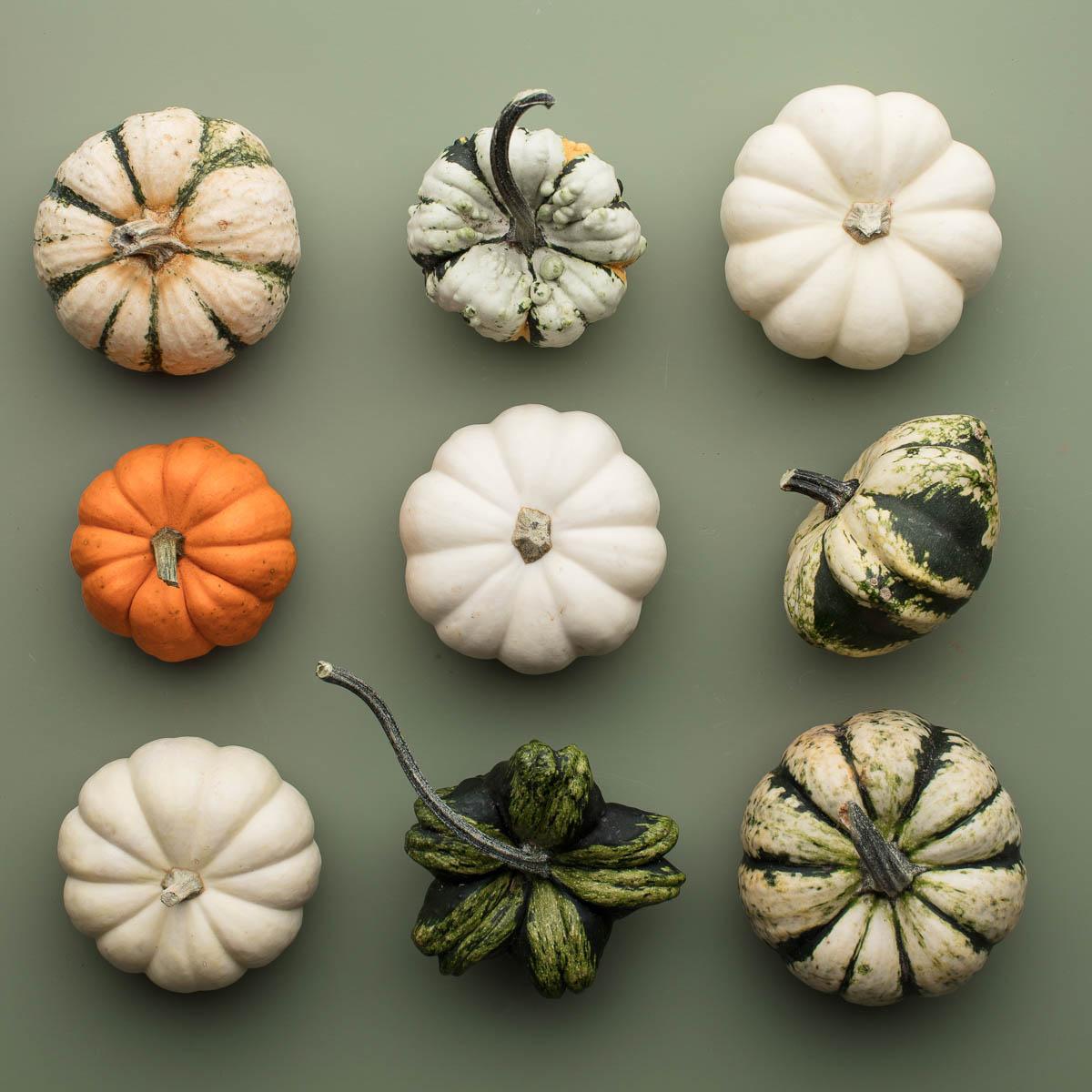 pyo-pumpkin-kent-pick-your-own-pumpkin-variety-green-support-local-magazine.JPG