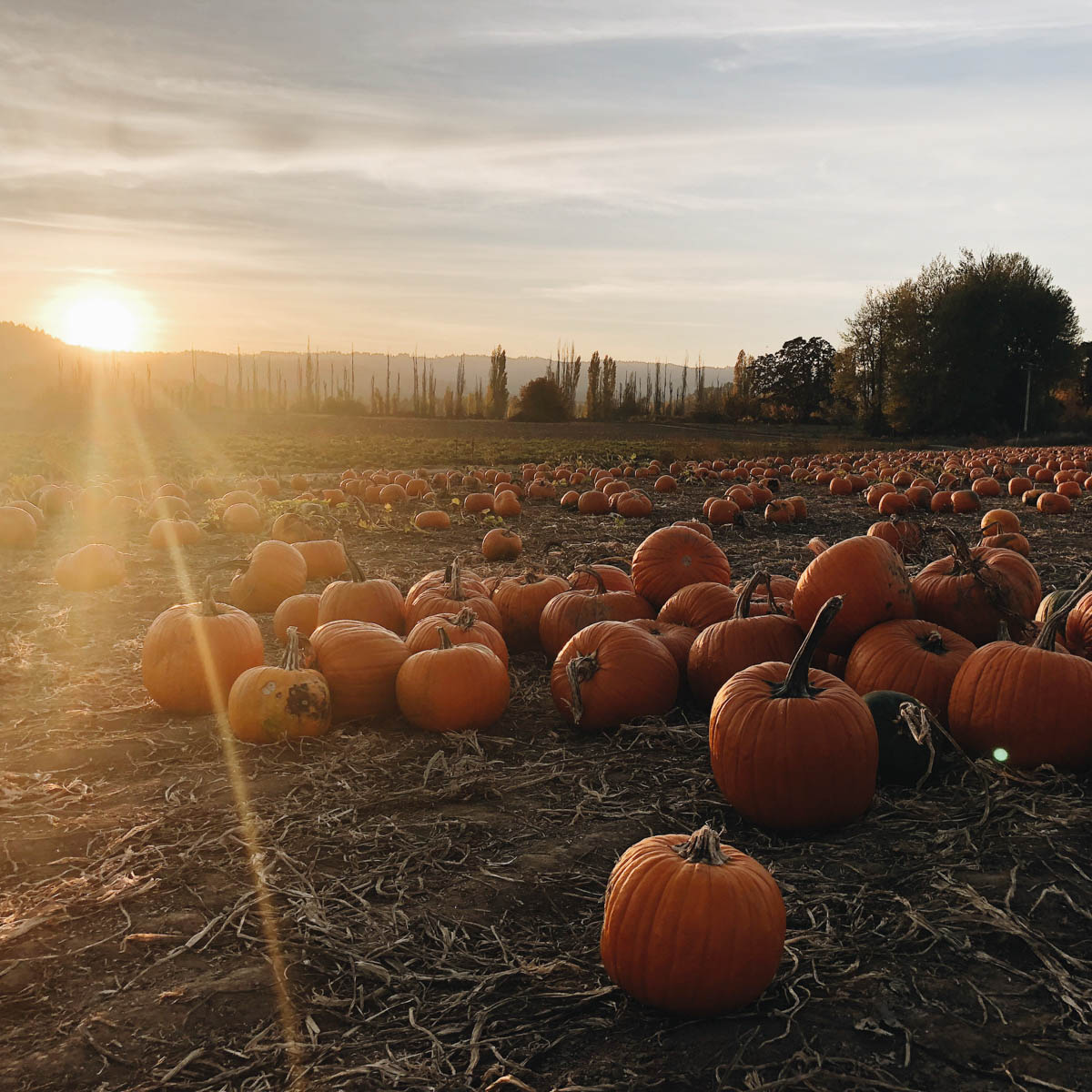 pyo-pumpkin-kent-pick-your-own-pumpkin-variety-support-local-magazine-twighlight.JPG