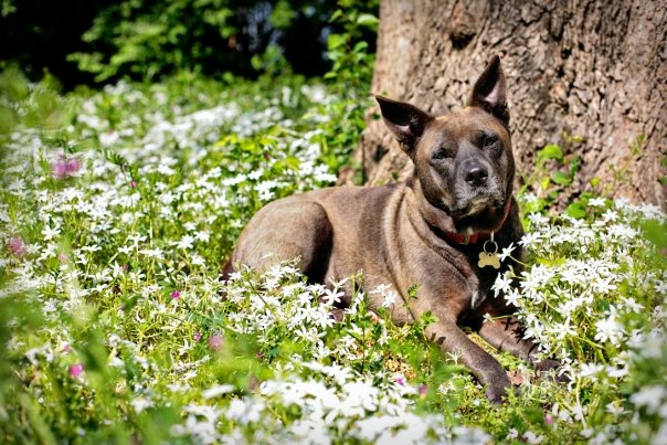 Grayce Mae Dog in Flowers