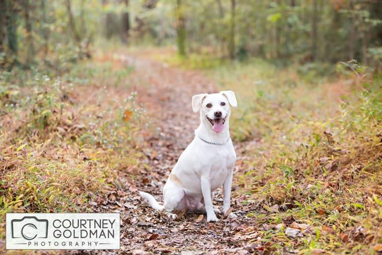 Decatur-Atlanta-Pet-Dog-Photographer-Courtney-Goldman-1.jpg