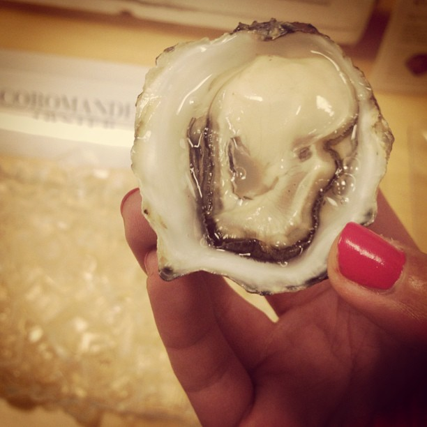 #6 Showing off an exceptional specimen of Coromandel during an  in-office oyster tasting .