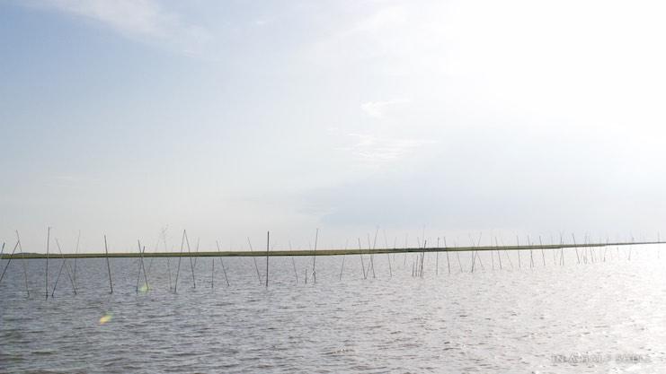 IAHS-2015-07-10-Gulf-Oyster-Tour-IMG_4145.jpg