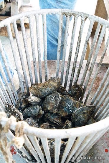 IAHS-2015-07-10-Gulf-Oyster-Tour-IMG_4262.jpg