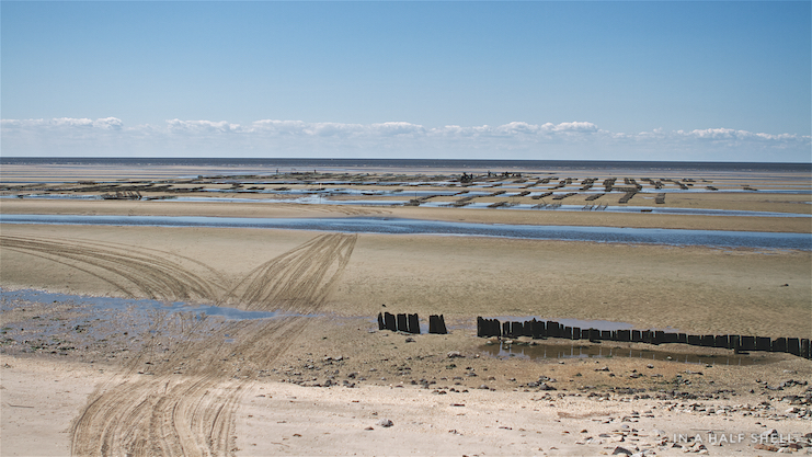 IAHS-2016-05-03 Cape May SaltsIMG_6302