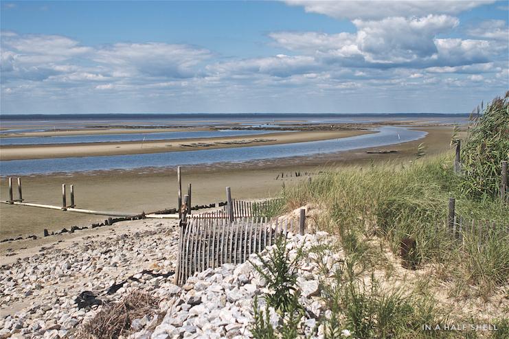 IAHS-2016-05-03 Cape May SaltsIMG_6305