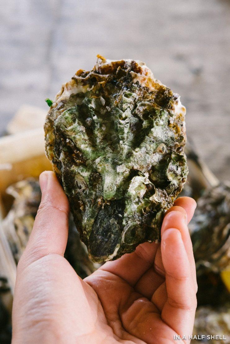 InAHalfShell-Bonaire-Oysters-0278-741x1111.jpg