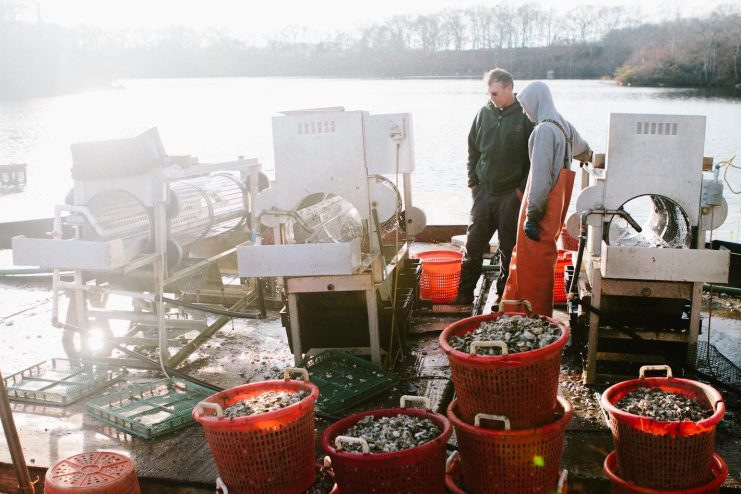Oyster Sorting at Fishers Island