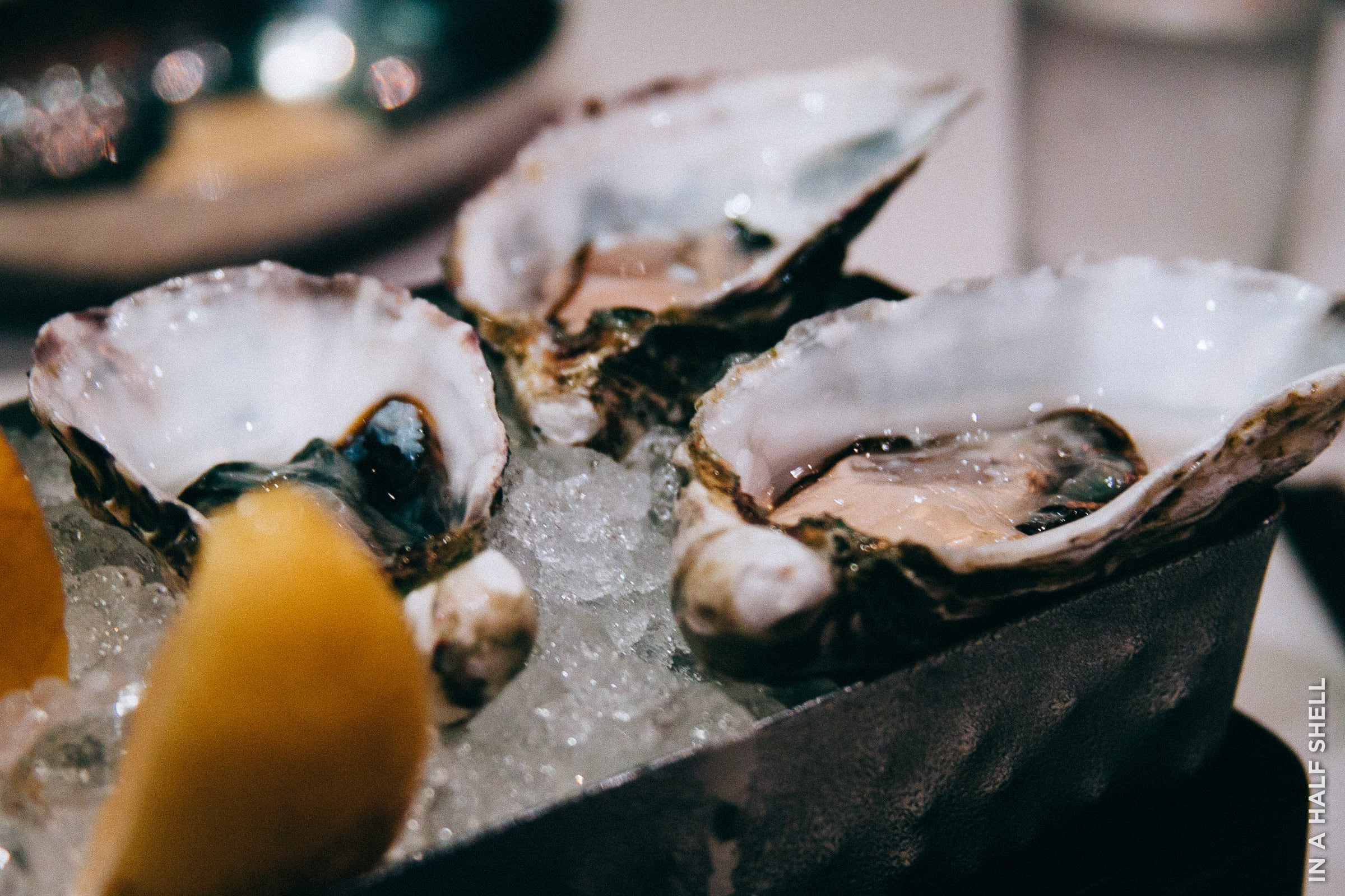Sydney Rock oysters from Australia savored in Jakarta, Indonesia