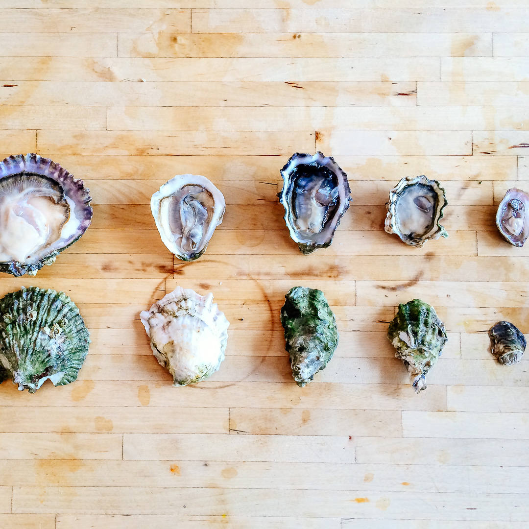 InAHalfShell-Oyster101-Lesson1.jpg