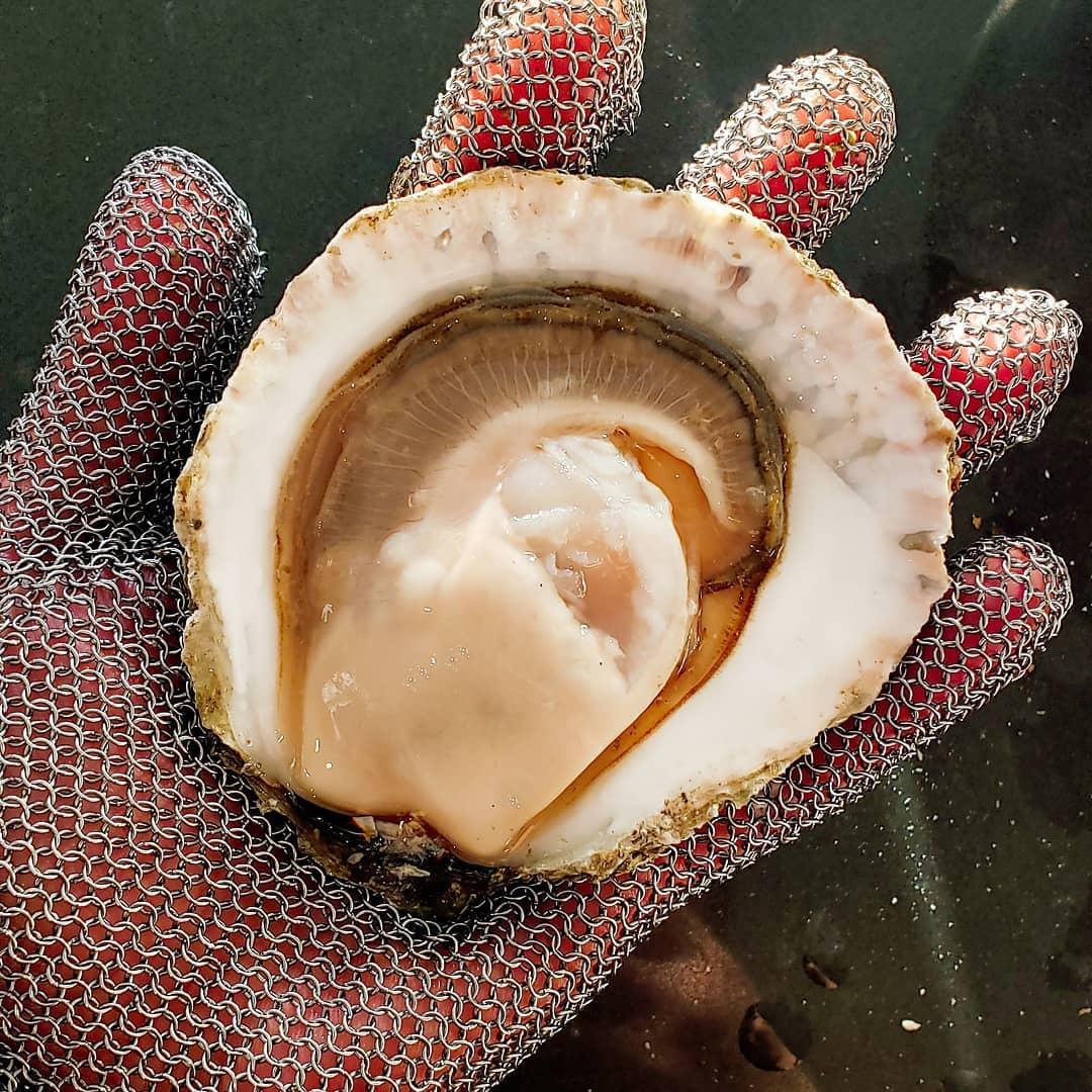 InAHalfShell-OysterStandards-Belon.jpg