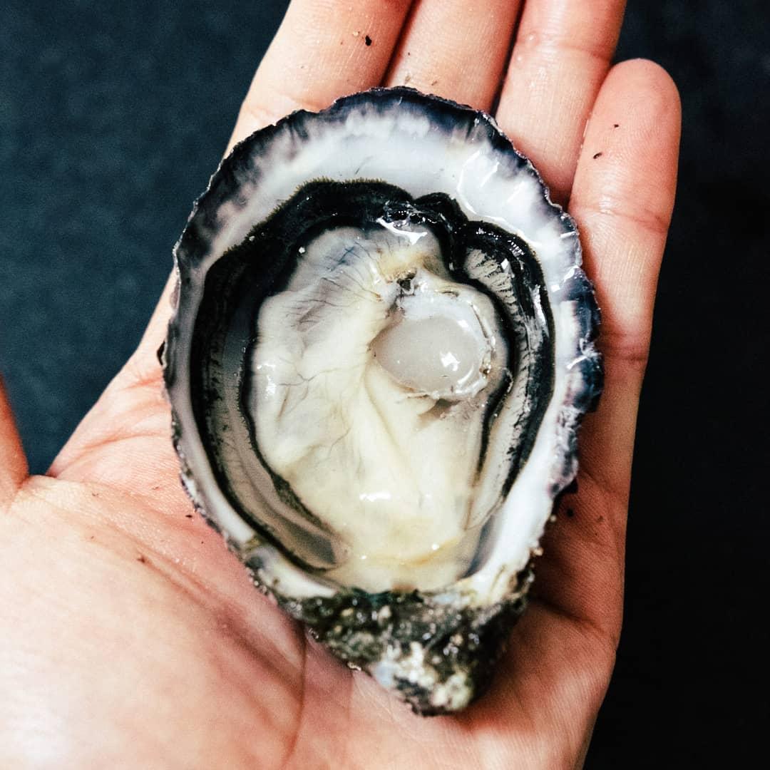 InAHalfShell-OysterStandards-Pacific.jpg