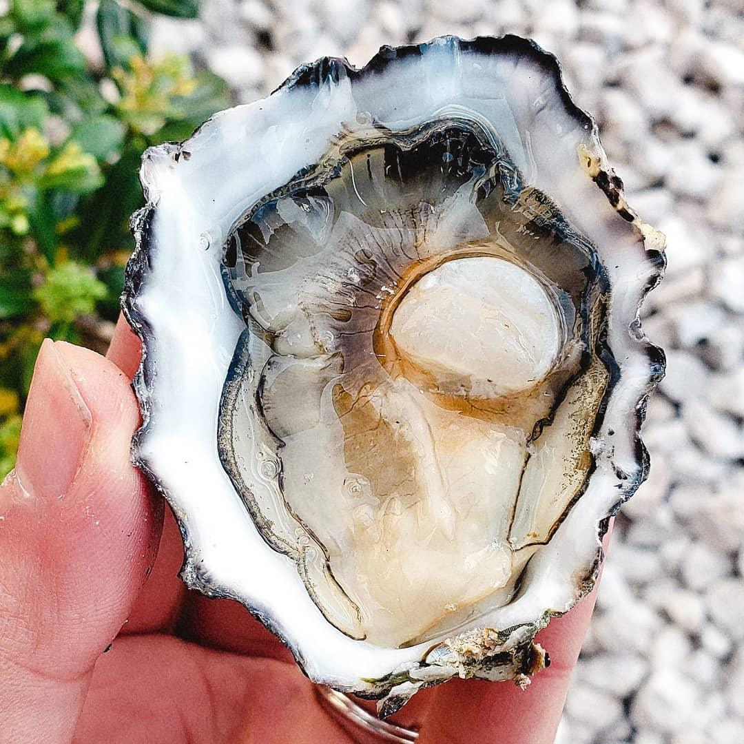 InAHalfShell-OysterStandards-Pacific2.jpg