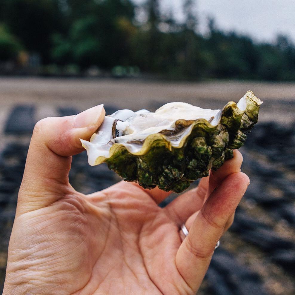 InAHalfShell-OysterStandards-Pacific5.jpg
