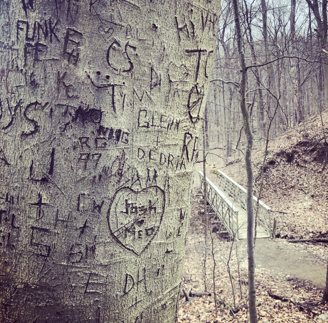 Cuyahoga Valley National Park, Stanford Trail (no trees were harmed in the making of this blog post)
