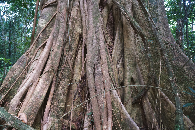 Ecuador_AmazonTrees.jpg