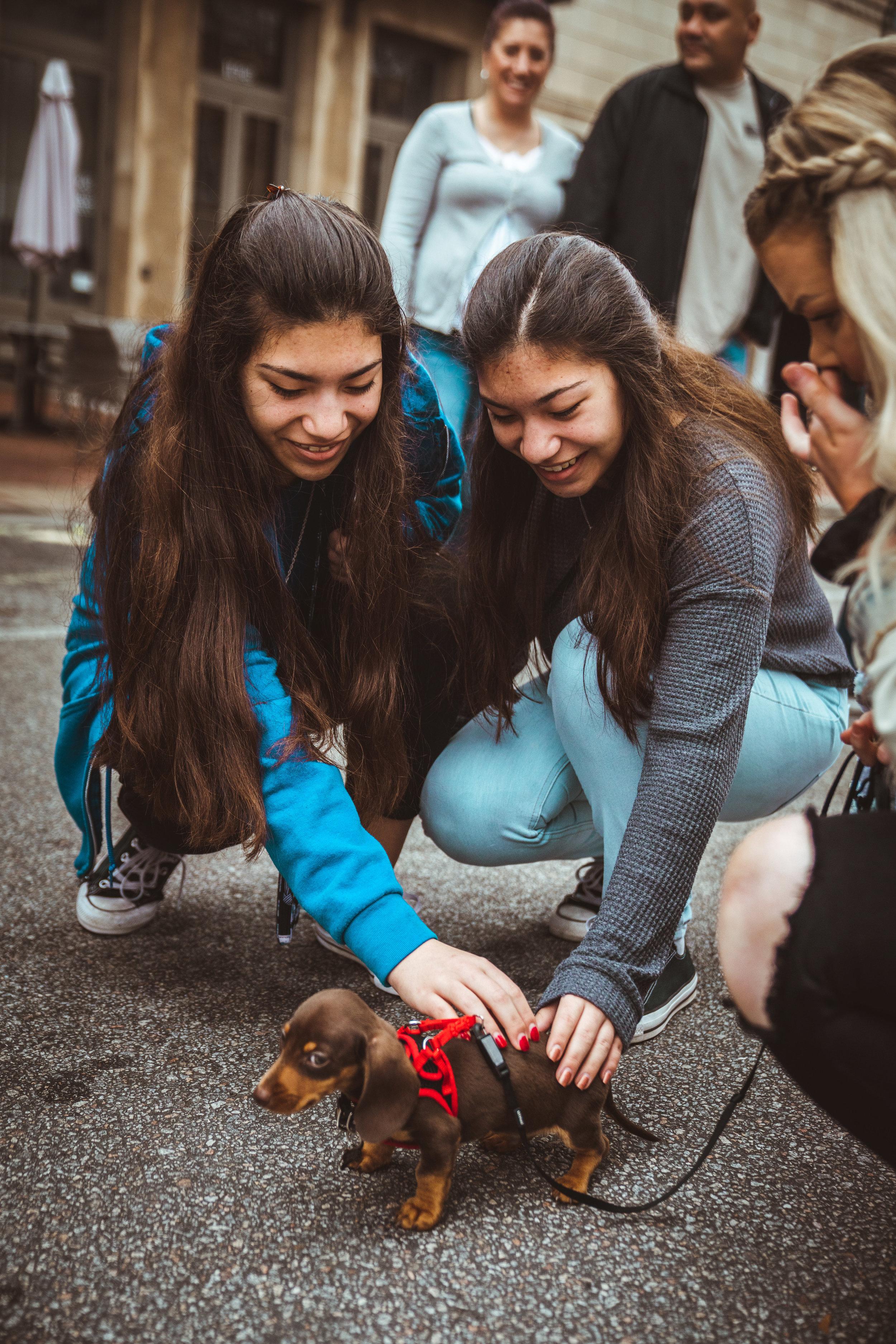 Puppy love by Paul Chelmis