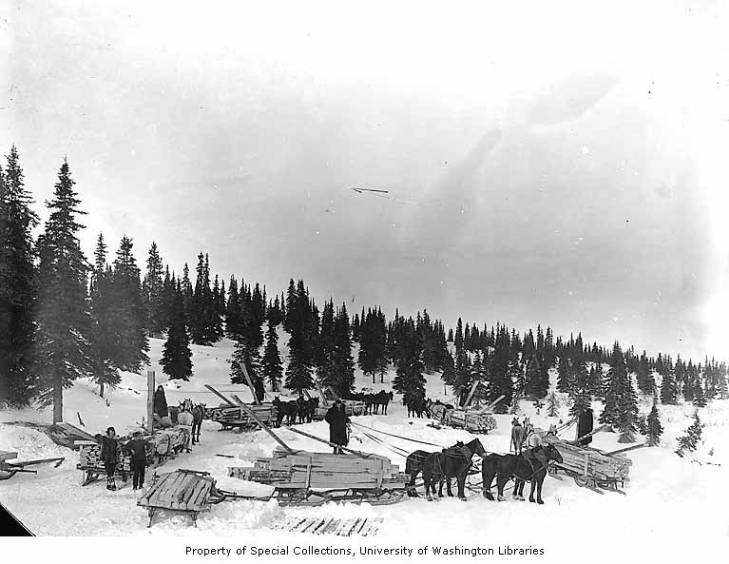 Wild Goose Mining and Trading Company's horse drawn sleds hauling lumber from the company mill on Duncan Creek, 12 miles northeast of Council, circa 1905.jpg