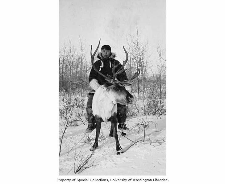 Eskimo named Thomas Sokweena riding reindeer at Reindeer Fair at Mary's Igloo, Seward Peninsula, circa 1916.jpg