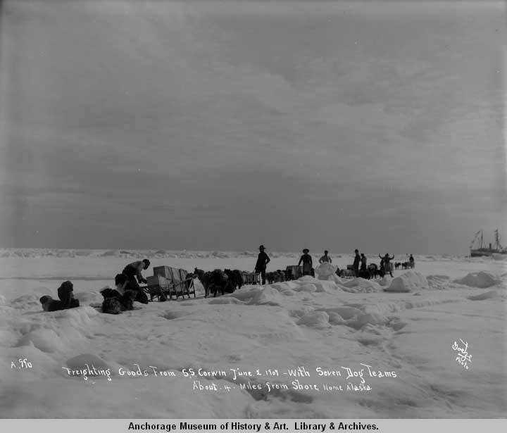 Freighting goods from S.S. Corwin, June 2, 1907, with seven dog teams about 4 miles from shore, Nome, Alaska..jpg