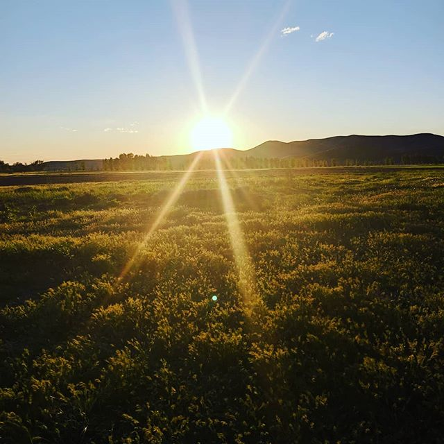 Farming sunrise to sunset, dry Creek is beautiful #savedrycreek  Farmtotable #seedtoplate  #boisebest  #instagood