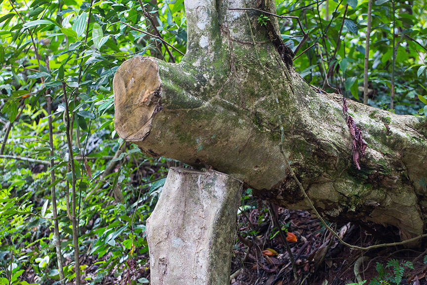 an interesting sight of a standing log supporting another log.
