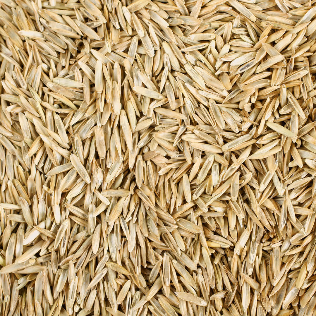 Grass Seed for lawn rejuvenation