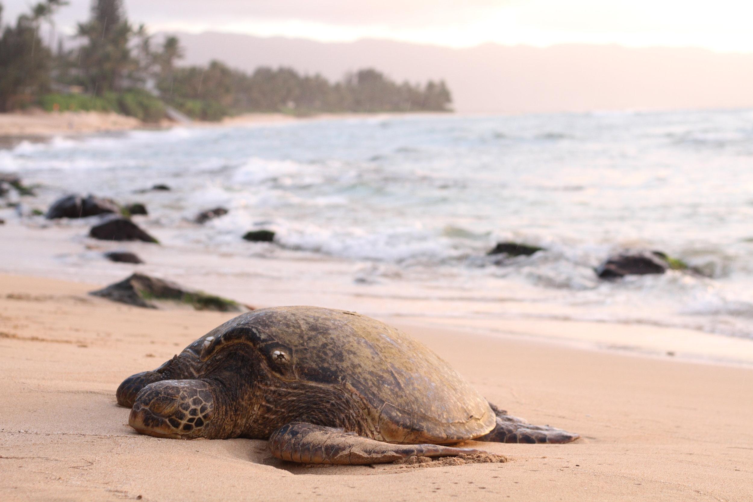 ebay-turtle.jpg