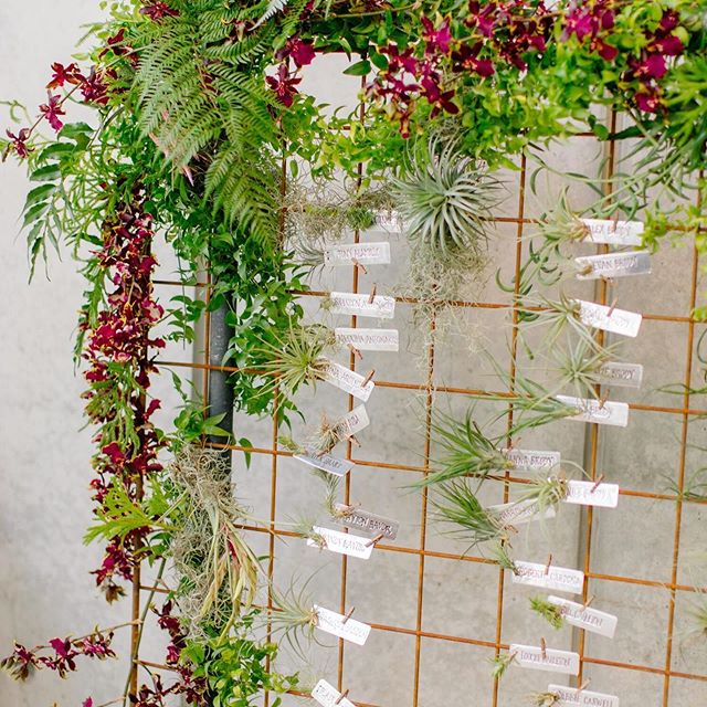 We got a tad scientific for this wedding at the California Academy of Sciences ;) Guest tables were named after different varieties of air plants and these metal escort cards with tiny air plants helped get guests into the biology theme! Each guest was gifted a small terrarium to take their favor home 🌱 Our amazing florist @floragrubbgardens created the escort card display to mimic the living wall @calacademy (metal tags designed and handcrafted by #AdelphiEvents). What better combination than gorgeous AND educational!?