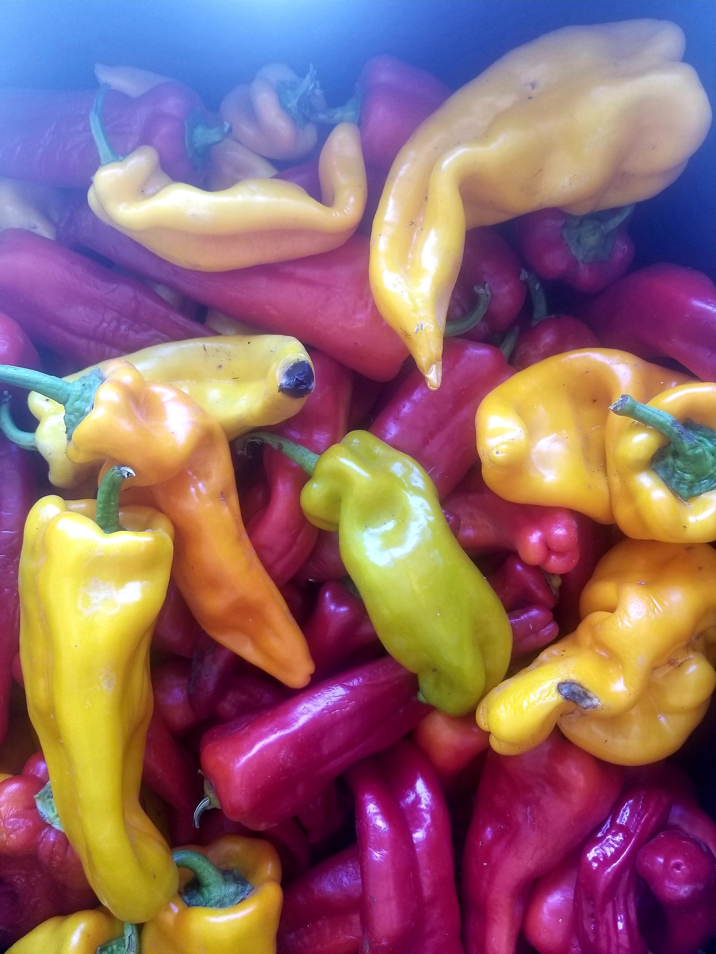 pepper medley.jpg