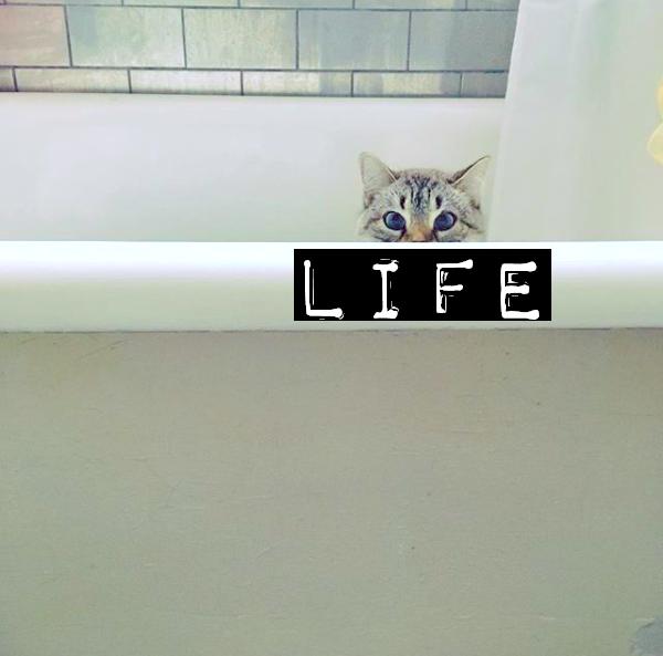 CAT LIFE.png
