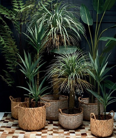 Love baskets. Love year round health greenery (that won't die on me for lack of watering) 🌱🌾🤦🏼♀️We have beautiful greenery available with yuccas, traveller palms and butterfly palms. @art_and_accessories  #interior #inspiration #decor #home #house #lifestyle #fashion #trend #homedecor #homesweethome #homeinterior #irishinteriors #irishdesign #interiors #flowers #baskets #plants #greenery #artandaccessories