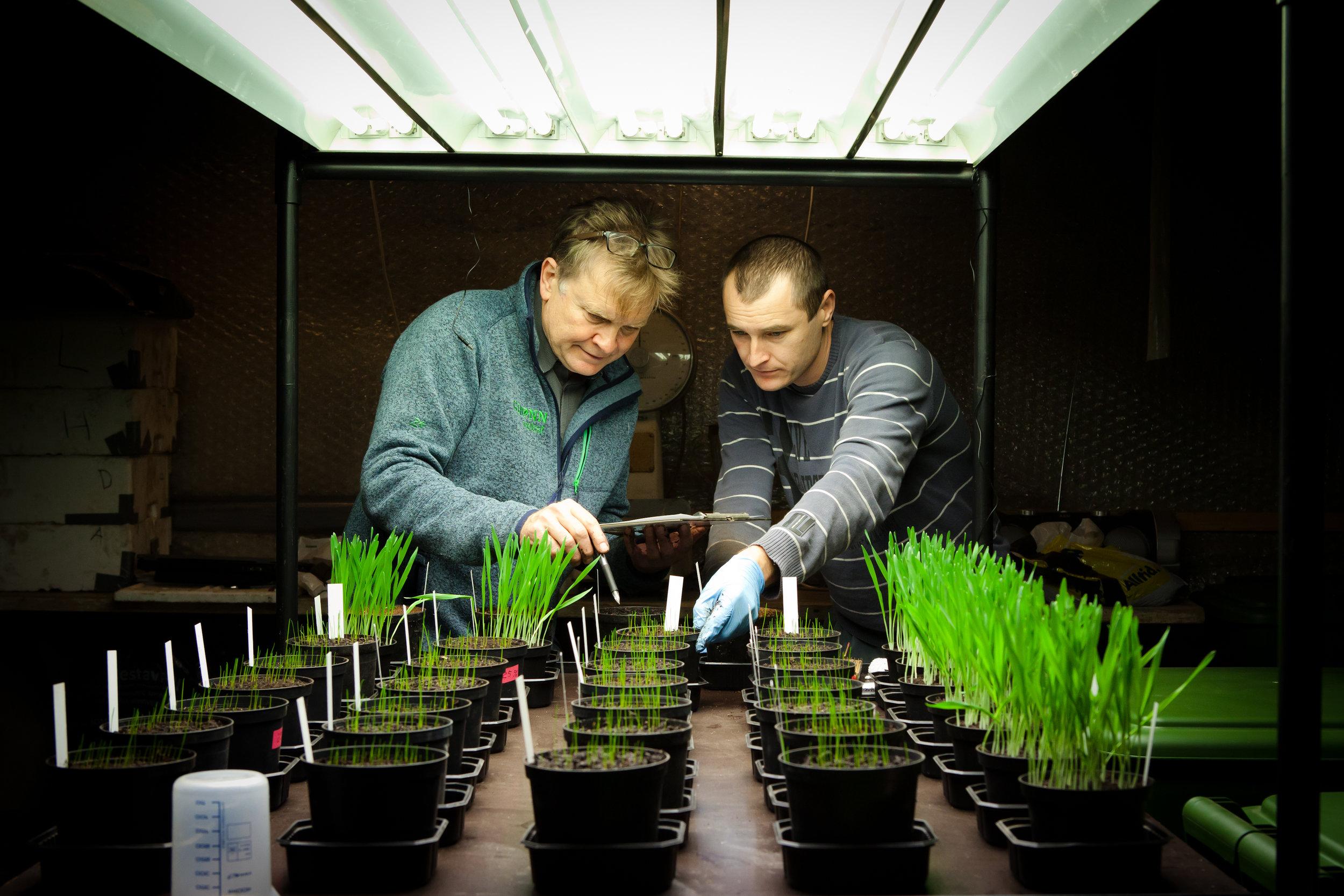 Grønn vekst - From garden waste to soil