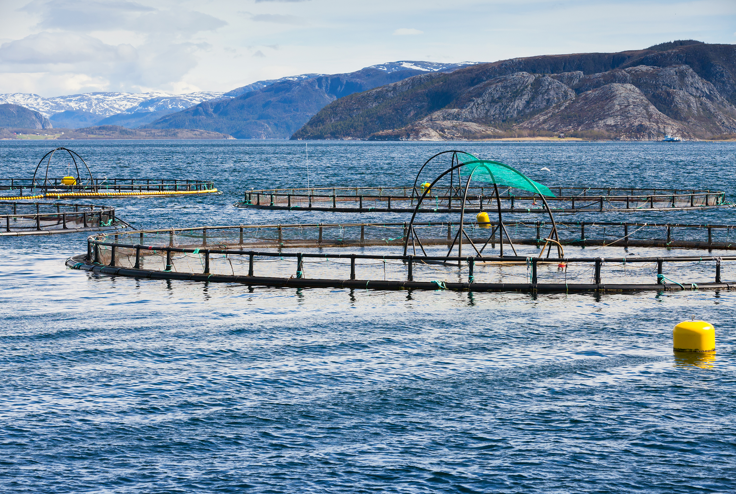 Norwegian-fish-farm-for-salmon-growing-in-fjord-184700446_4500x3020_low.jpg