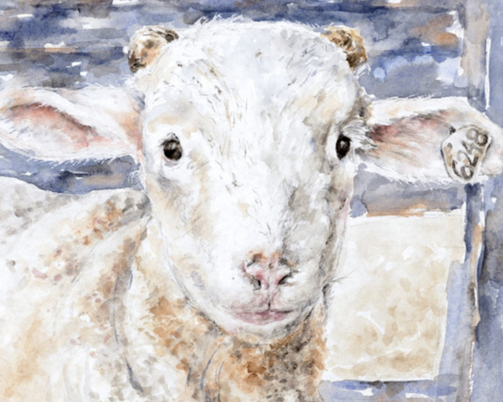 Beth Boyland Paintings - Watercolors celebrating the beauty of livestock and locally grown produce