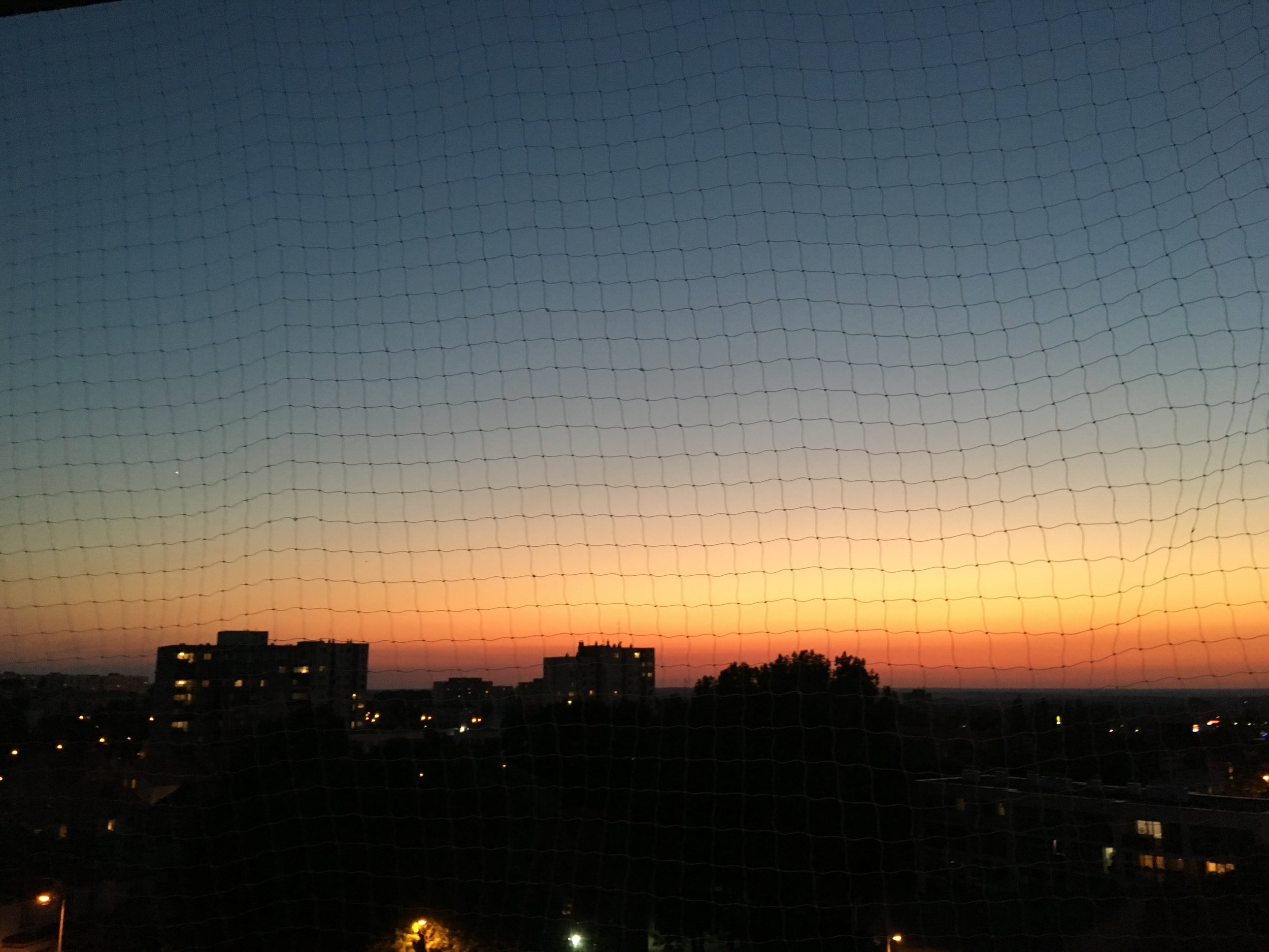 The sky behind a net, but what wouldn't you do for the cats ...