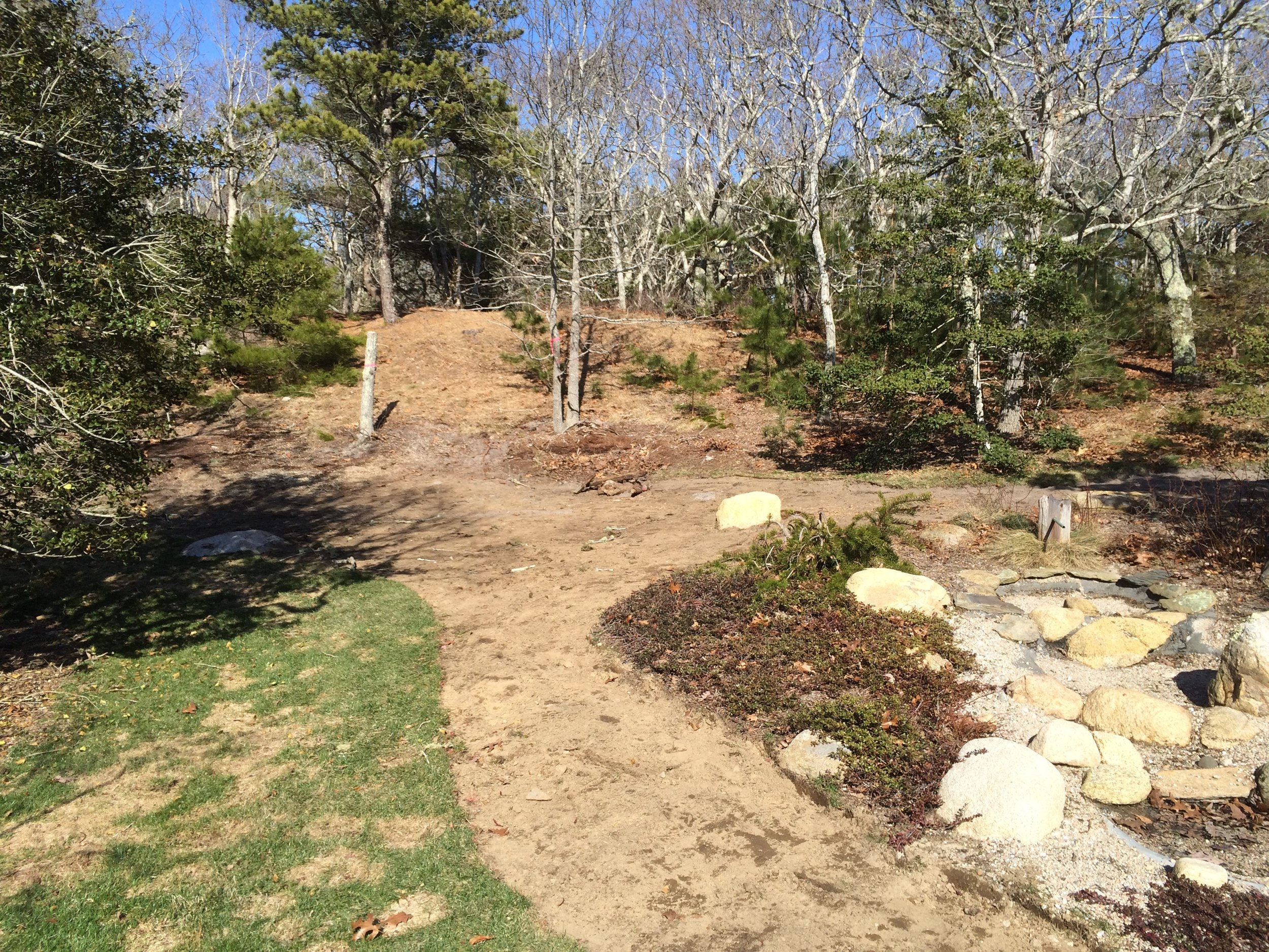 Cape Cod  - Progress picture of naturalization process. Removing gratuitous lawn to introduce natives back to property.