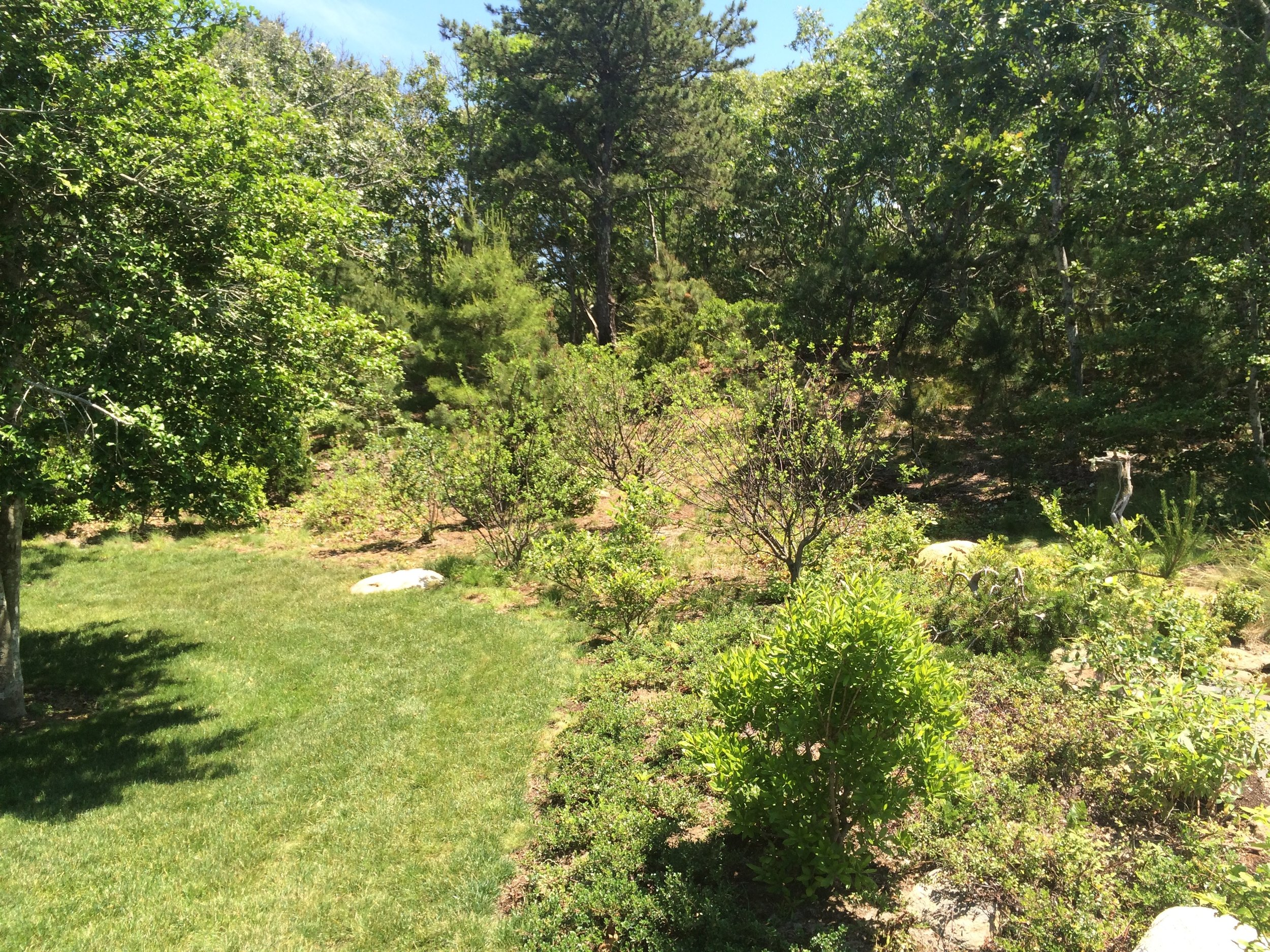 Cape Cod  - Completed naturalization process. Removing gratuitous lawn to introduce natives back to property.