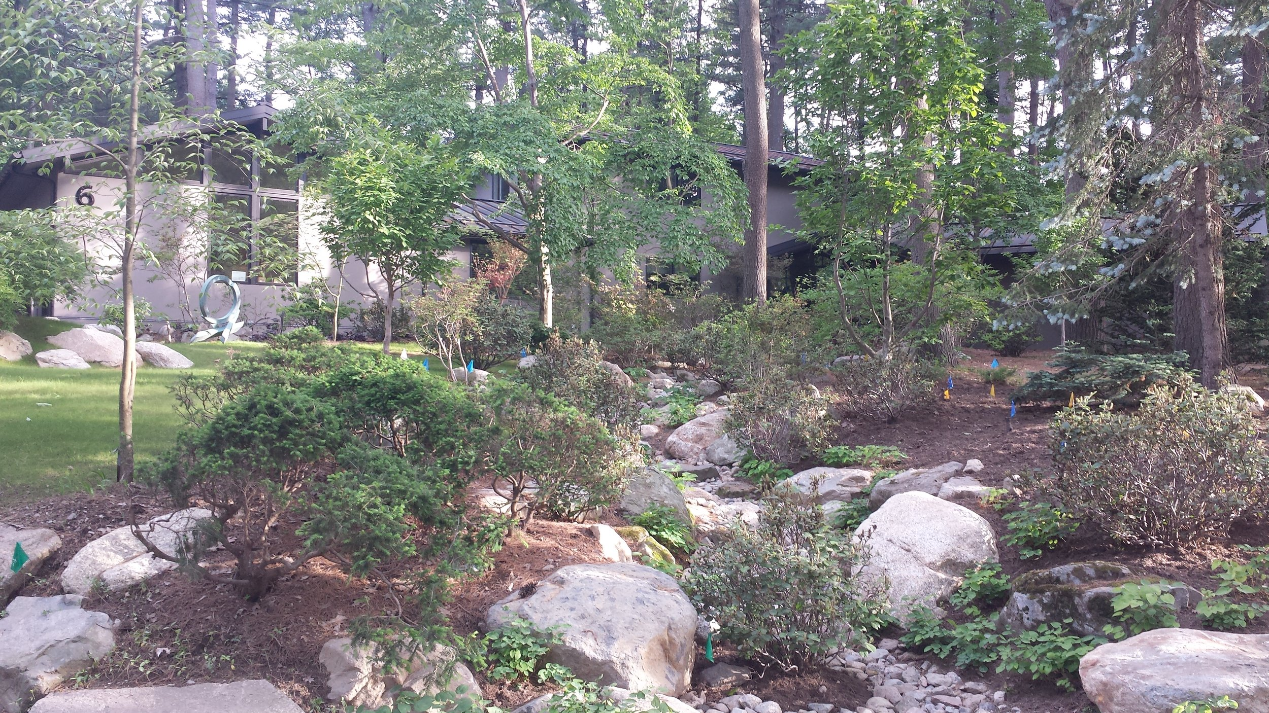Weston MA - View from street. Dry river bed to deal with water run off. Mix of exotics and natives. Design by Hank Gilpin and BHS